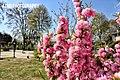 Pink flowers pinkyy.jpg