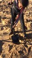 Fichier:Plant05 WikiChallenge.webm
