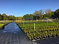 Plant Nursery Field Picture.jpg