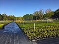 Plant Nursery Field Picture.jpg