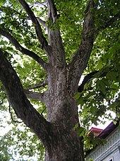 Hybrid (biology) - Wikipedia