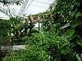 Poland. Warsaw. Powsin. Botanical Garden 124.jpg