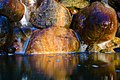 Pond Waterfall (139547869).jpeg