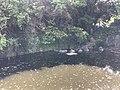 Pond near Konrenji Temple on Innoshima Island.jpg