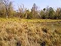 Ponds @ Wayanad Wildlife Sanctuary, Muthanga Range - panoramio (1).jpg
