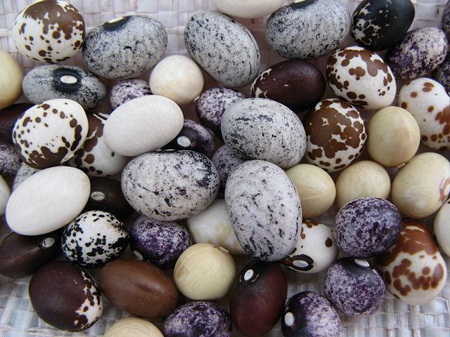 Semená fazule