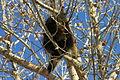 Porcupines (5228849765).jpg