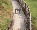 Prague Zoo - zebras.jpg