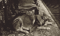 Prestes cachorro Príncipe 1936.png
