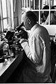 Professor P.C.C. Garnham with microscope Wellcome L0024384.jpg