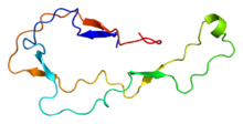 Protein CALR PDB 1hhn.png