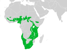 Map showing the breeding areas in Africa
