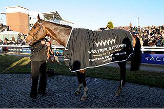 Punjabi (horse) British-bred Thoroughbred racehorse
