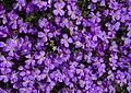 Purple (5580739308).jpg