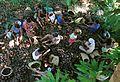 Quebradeiras de côco - Tocantins.jpg