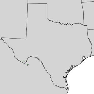 Quercus graciliformis - Image: Quercus graciliformis range map 1