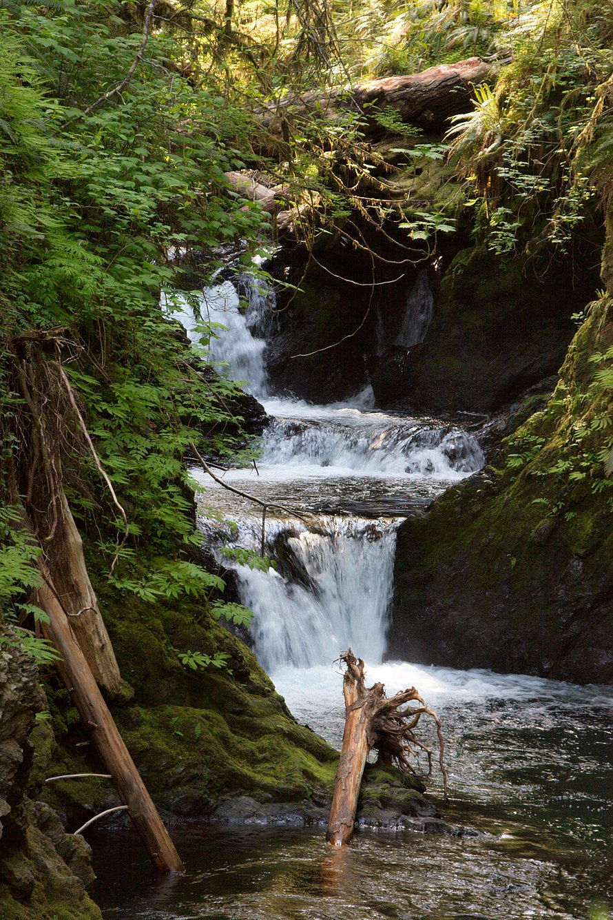 Quinault Rainforest (3604354245).jpg