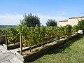 Rallye des vignobles 2019, 60, Maison des Sancerre, terrasse.jpg