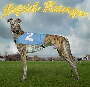 English Greyhound Derby - Rapid Ranger, twice winner of the Derby 2000–2001