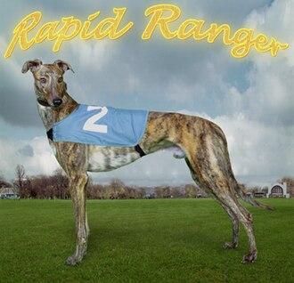 English Greyhound Derby - Rapid Ranger, twice winner of the Derby 2000–2001