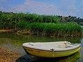 Reeds by the Mladost lake , Veles.jpg