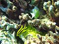Reef2159 - Flickr - NOAA Photo Library.jpg