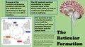 Reticular Formation.pdf