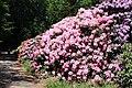 Rhododendronpark Bremen 20090513 120.JPG