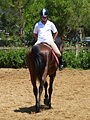 Riding a Horse Backwards 1110824.jpg