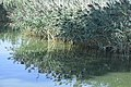 Riflessi sul Lago di Annone.jpg