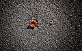 Rincones del Cabo de Gata 06.jpg