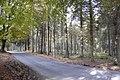 Road Through the Trees - geograph.org.uk - 1541013.jpg