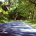 Road in Wood.jpg
