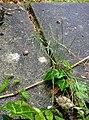 Rock-cornwall-england-tobefree-20150714-201423-2.jpg