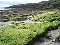 Rock pools at Towan Beach - geograph.org.uk - 564430.jpg