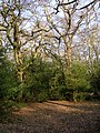 Rockram Wood, New Forest - geograph.org.uk - 138750.jpg
