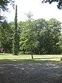 Rosengarten Forst, Ginkgo und Serbische Fichte im Wehrinselpark, Sommer, 01.jpg