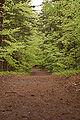 Roztoczanski park narodowy 011a.jpg