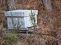 Ruche - tourbière de Kerfontaine.jpg