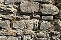 Ruine Dellingen (Bräunlingen)-3337.jpg