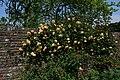 SISSINGHURST CASTLE Roses.JPG