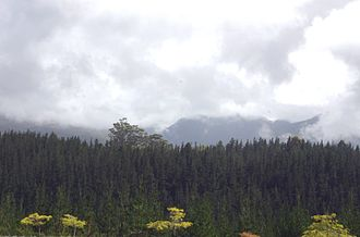 Saasveld Forestry College - View from Saasveld to Outeniqua Mountains 4 January 2007