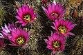 Saguaro Nat. Park (16172321172).jpg