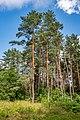 Sakaliny local biological reserve p17.jpg