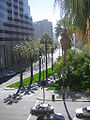 San Jose Palm Trees 02.jpg