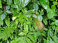 San Juan Botanical Garden - DSC07091.JPG