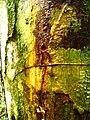 Sangra d´agua, Parque Nacional Serra do Conduru.jpg