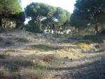 El Tesorillo, en el Pinar de la Algaida