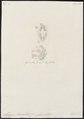 Sargus rondeletii - 1700-1880 - Print - Iconographia Zoologica - Special Collections University of Amsterdam - UBA01 IZ13100029.tif