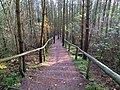 Schody ze wzgórza Zielonka - panoramio.jpg